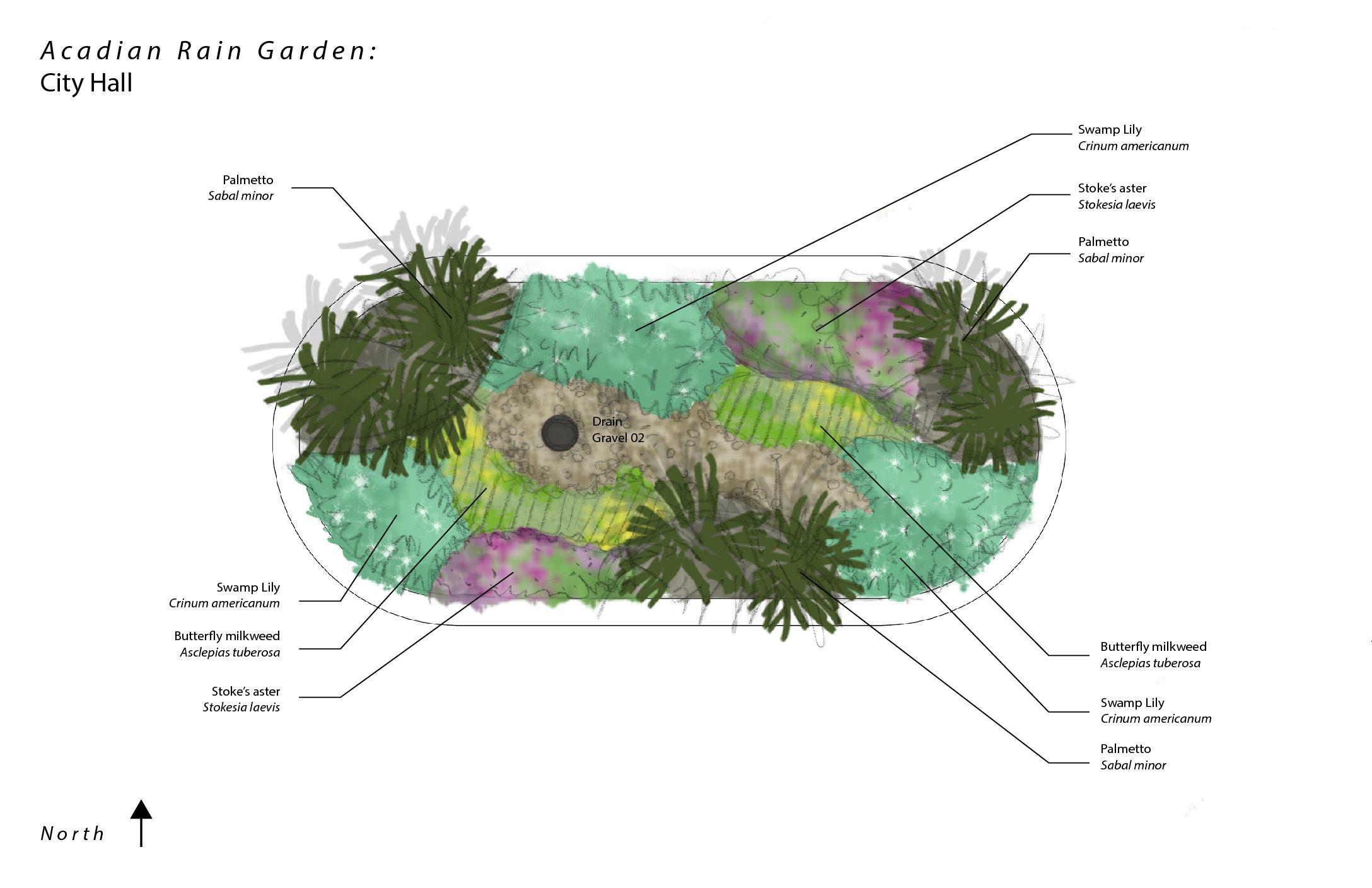 Acadian Rain Gardens Update #2